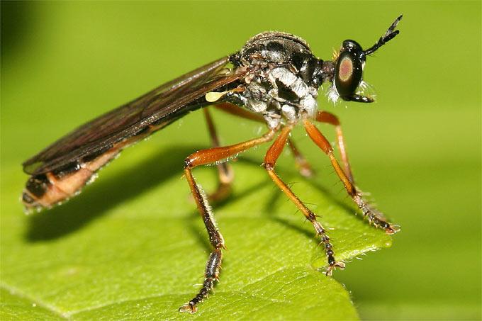 insektensterben weniger bienen fliegen schmetterlinge nabu. Black Bedroom Furniture Sets. Home Design Ideas