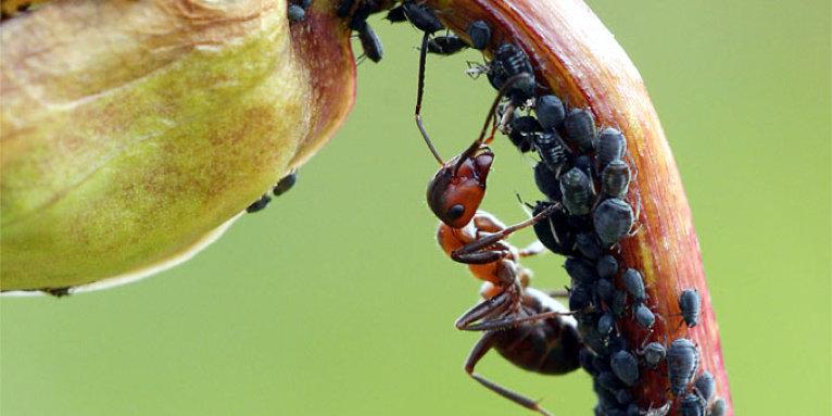 Fliegenlarve in der wohnung