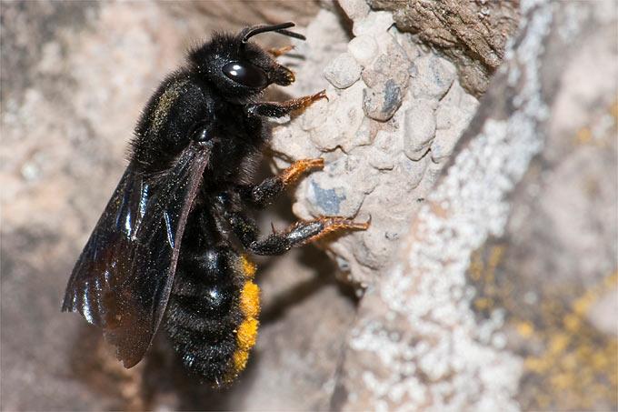 tipps f r wirksame wildbienen nisthilfen nabu. Black Bedroom Furniture Sets. Home Design Ideas