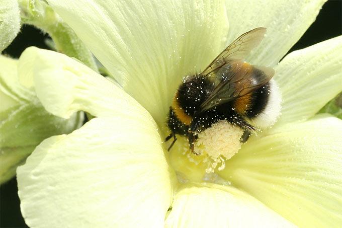 Schlaraffenland Fur Bienen Nabu