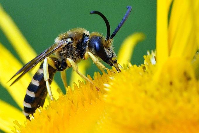 Welche Bienenarten gibt es und wie kann man ihnen helfen