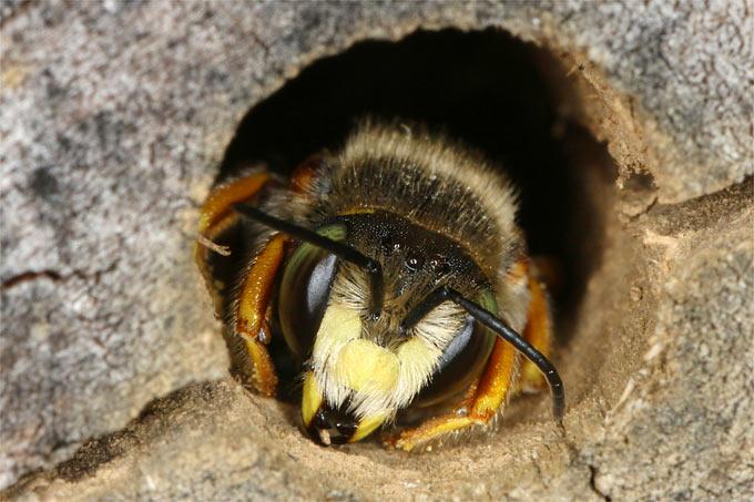So Uberwintern Insekten Im Garten Nabu