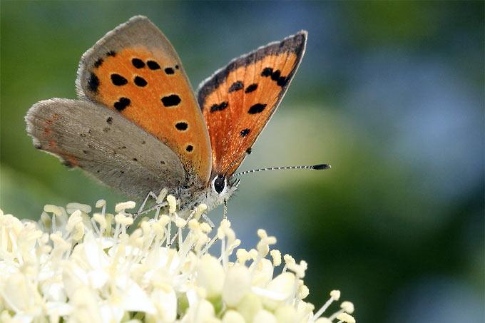 Ein Garten Für Schmetterlinge - Nabu Blumen Schmetterlinge Im Garten