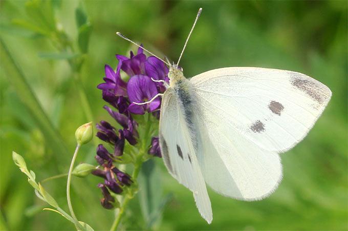 37f56bc30331c8 Insektenfreundlicher Garten - NABU