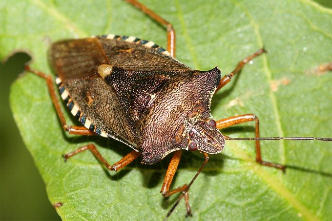 insekten spinnen nabu aktivit ten. Black Bedroom Furniture Sets. Home Design Ideas