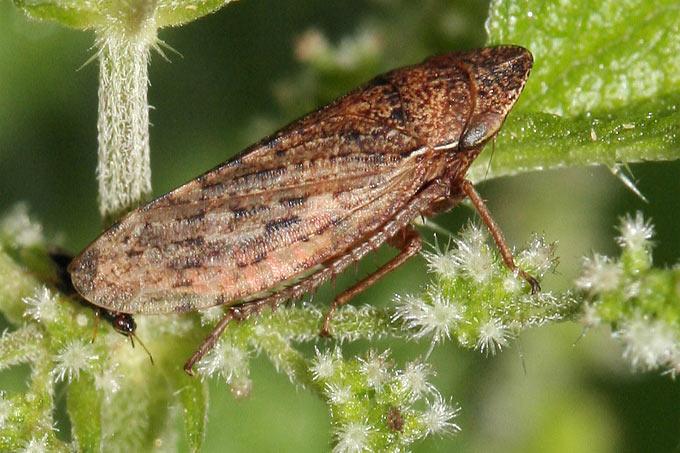 Tipps Und Tricks Zum Insekten Bestimmen Nabu