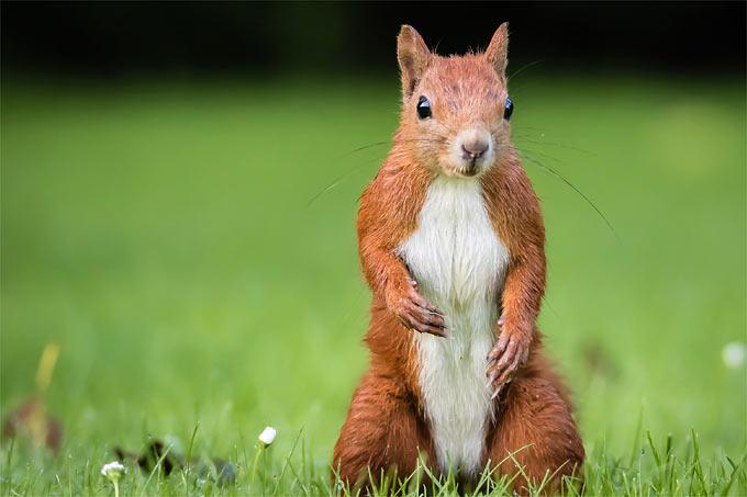Was fressen eichhörnchen am liebsten