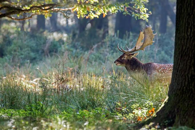 Lebensraum Wald - NABU
