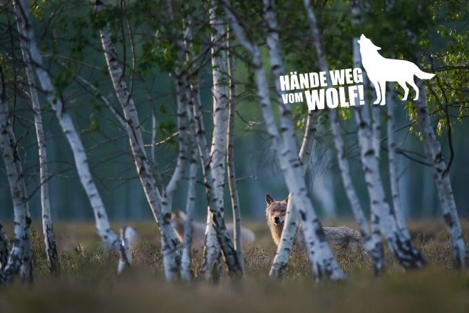 NABU - Naturschutzbund Deutschland