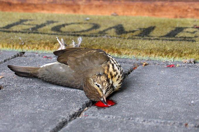Achtung Kollision Glastod Von Vögeln Verhindern Nabu