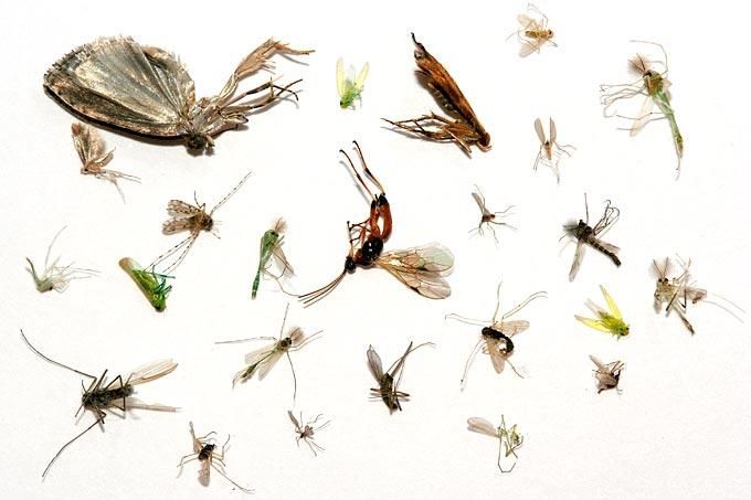 Insektensterben weniger bienen fliegen schmetterlinge for Kleine teichfische arten