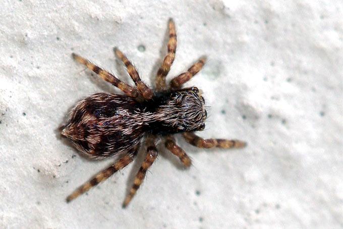 Spinnenarten Im Haus