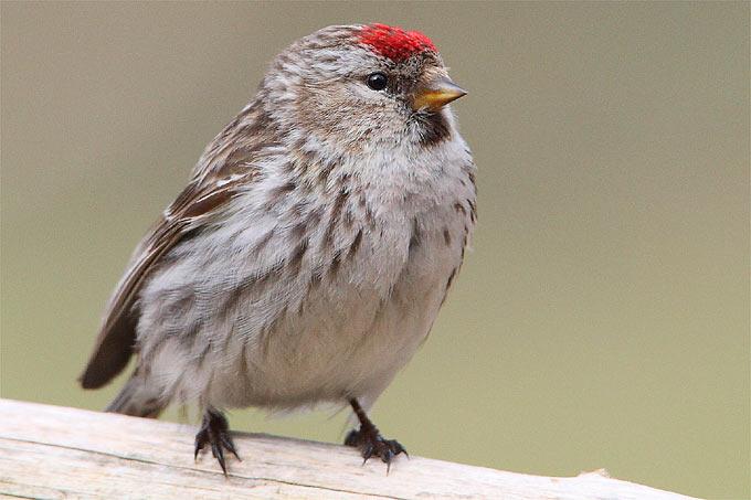 Was Fressen Unsere Wintervogel Nabu