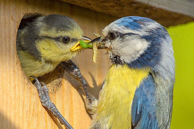 Wer Insekten mag, hat es zunehmend schwer. - Foto: NABU/Rita Priemer