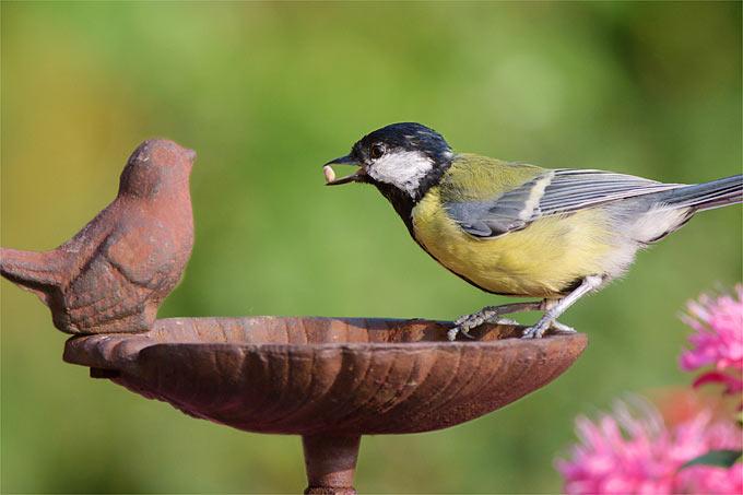 Vogeltränken werden im Sommer gern angenommen.- Foto: NABU/Rita Priemer