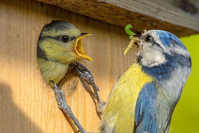 Bauanleitungen Für Vogel Nistkästen Nabu