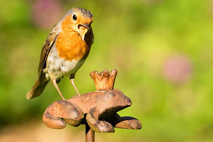 Stunde Der Gartenvögel Ideen Und Aktionen Für Kinder Nabu