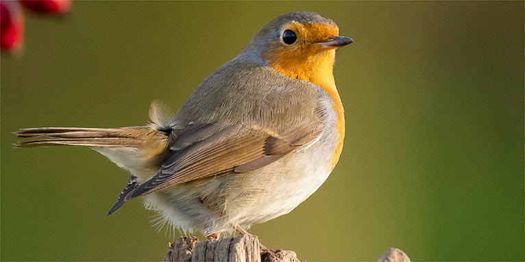 Stunde Der Gartenvogel So Viele Vogelzahler Wie Noch Nie Nabu