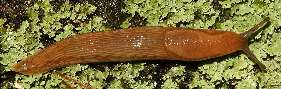Weichtiere: Schnecken und Muscheln - NABU