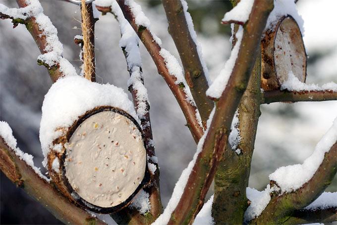 Winterfutterung Futtertypen Nabu