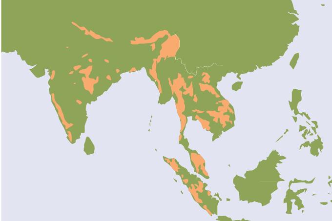 Verbreitung Tiger