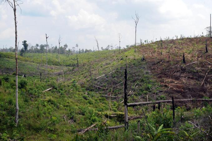Eine gerohdete Regenwaldfläche in Indonesien