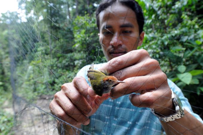 informationen tropischer regenwald