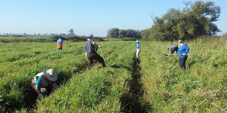 Bundesfreiwilligendienst im Naturschutz - NABU