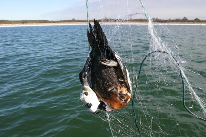 Über 200.000 Seevögel sterben Jahr für Jahr als ungewollter Beifang allein in der europäischen Fischerei. Foto: R. Stellers