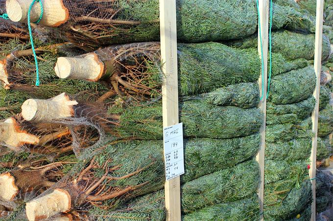 Weihnachtsbaum Kaufen Karlsruhe.öko Weihnachtsbäume Nabu