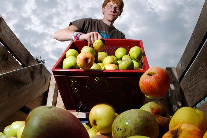 Apfelernte im Münsterland - Foto: NABU/Bernd Schaller