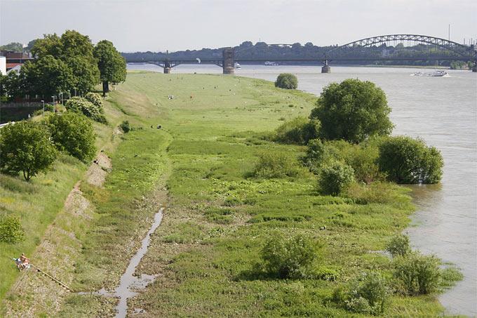 Kölner Rheinwiesen - Foto: Helge May