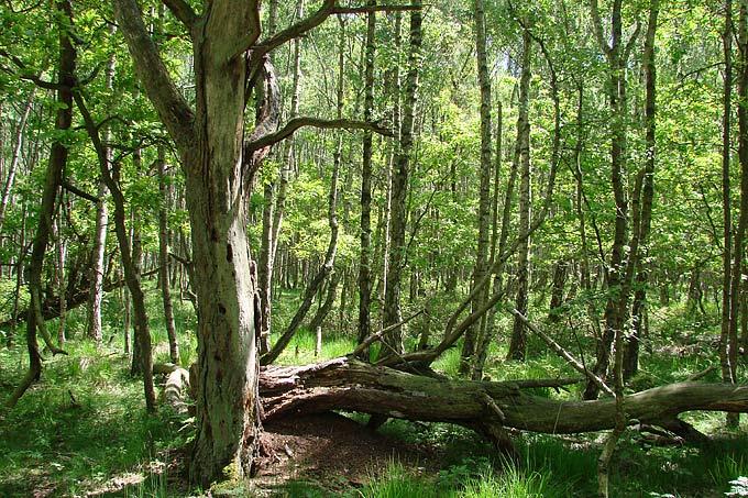 Deutschland Braucht Mehr Naturliche Walder