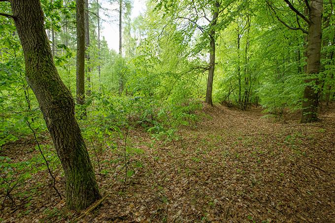 Wir brauchen mehr Wälder mit standortheimischen Bäumen wie der Buche. - Foto: NABU/Klemens Karkow