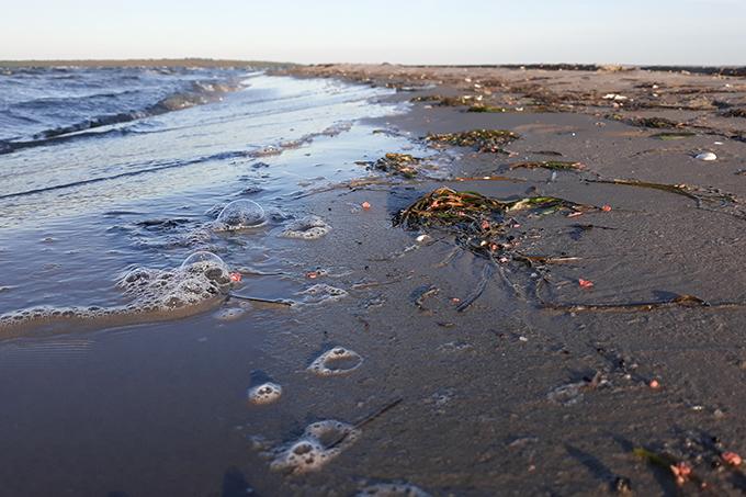 Hunderte Klumpen Schmierfette wurden in den vergangenen Tagen an die Küste des Greifswalder Boddens gespült. - Foto: NABU/Nils Möllmann