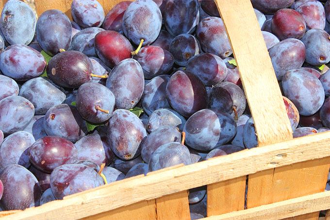 Saisonkalender Für Obst Und Gemüse Nabu