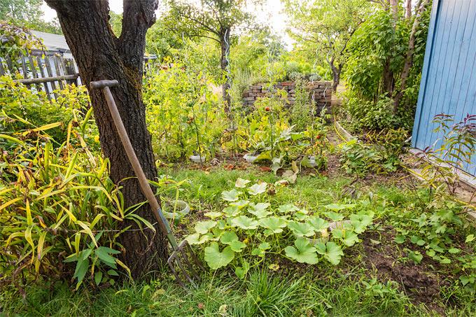 Frühherbstlicher Garten   Foto: NABU/Sebastian Hennigs