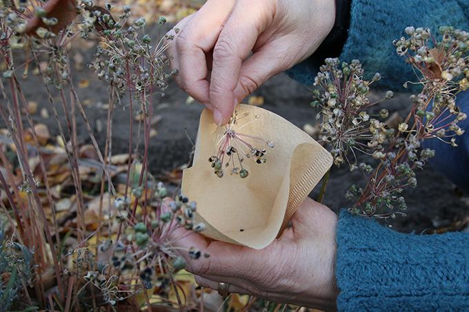 öko Bezugsadressen Samen Und Pflanzen Für Den Garten Nabu