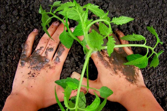 Gartenarbeit - Foto: Jutta Rotter/Pixelio.de