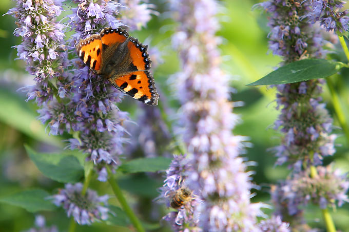 Ein Garten Für Schmetterlinge Nabu