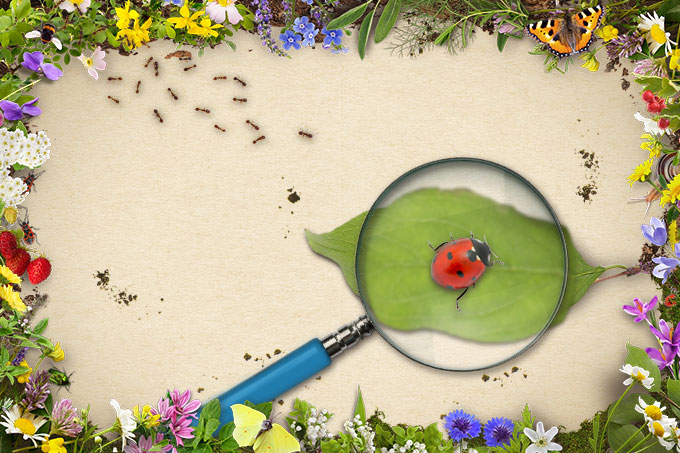 Geliebte NABU-Tipp: Nützlinge im Garten #HD_83