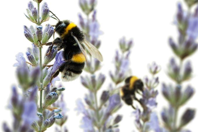 Insektensommer: Zählen Sie mit!