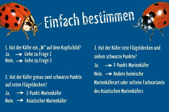Bestimmungshilfe für Marienkäfer - Grafik: NABU