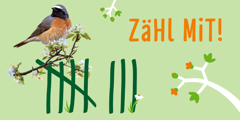 Bundesweite Stunde Der Gartenvogel Vom 13 Bis 16 Mai Nabu