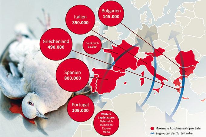 Jagd auf Turteltauben in der EU (Klick zum Vergrößern). Foto: David Tipling; Grafik: www.construktiv.de