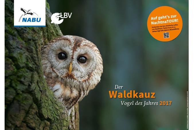 Waldkauz-Plakat - NABU