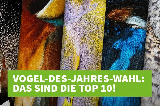 Vogel des Jahres 2021-Wahl: Die Top 10 stehen fest