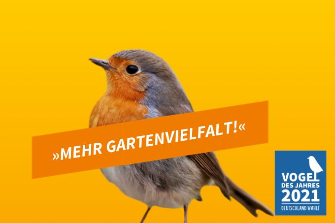 Wahlplakat für das Rotkehlchen. - Foto: NABU/Christoph Bosch