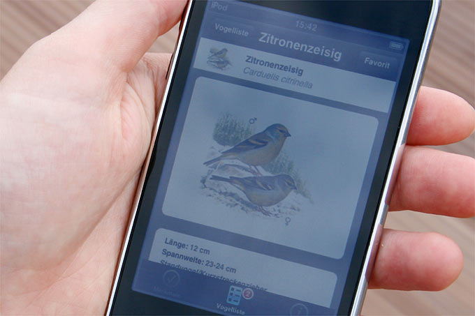 Vogelbestimmungs-App - Foto: Helge May