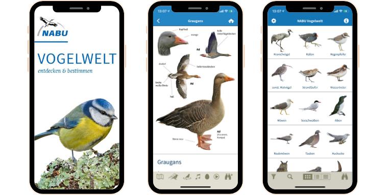 vogelarten kennenlernen und bestimmen frau kennenlernen schweiz
